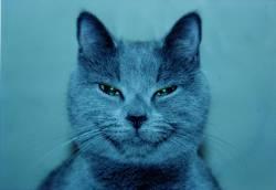 Фотография Даши Локтионовой «Кошка Ксюша»
